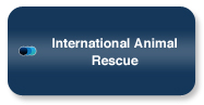 wns-inter-national-rescue.jpg